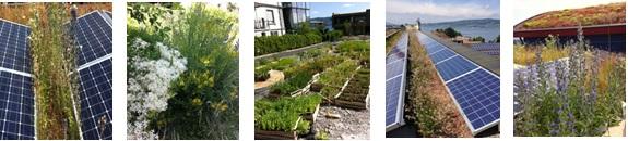 biodiversité toitures végétalisées solaires