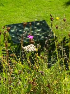 Photo Init Environnement toit végétalisé biodiversité