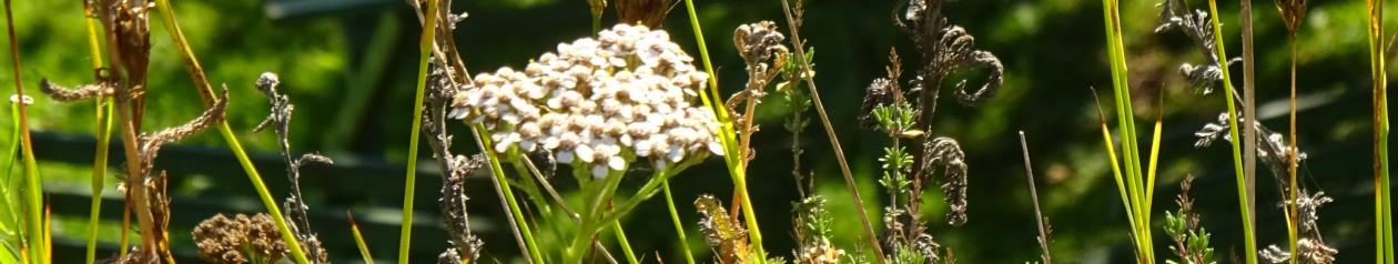 Init Environnement, Bâtiments écologiques, Biodiversité