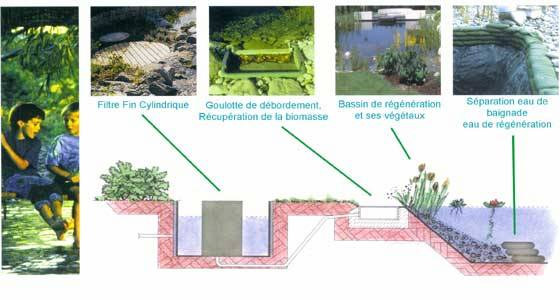 Piscine naturelle filtration for Plan piscine naturelle