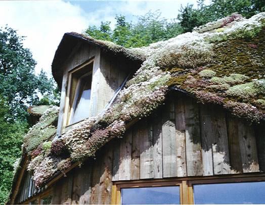 les toitures vegetalisees ou toits vegetaux. Black Bedroom Furniture Sets. Home Design Ideas